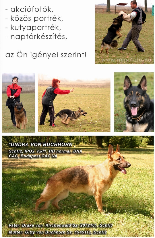 kutyas