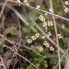 tavaszvaro08